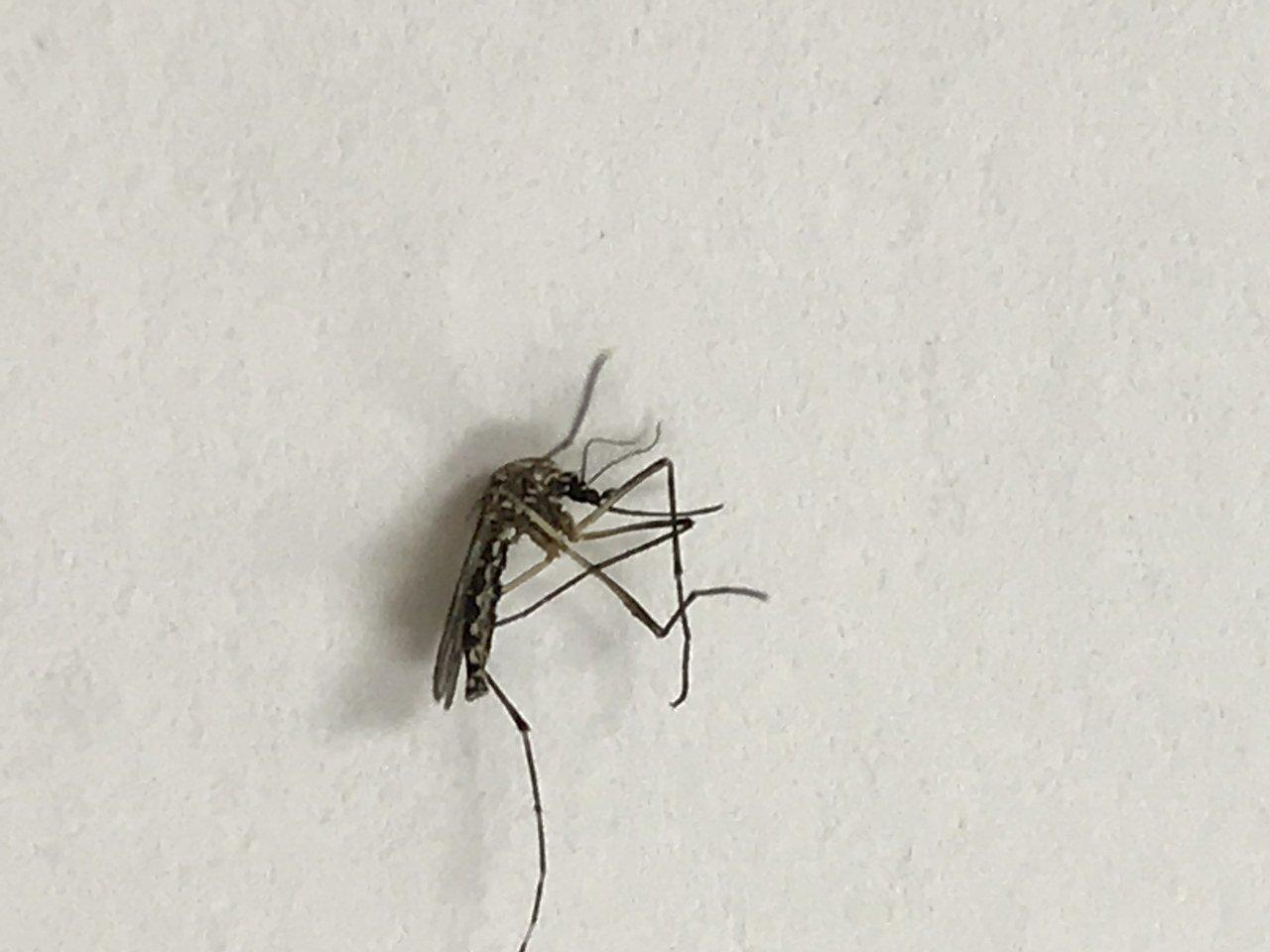 Identifying Mosquito Species using Smart-phone camera