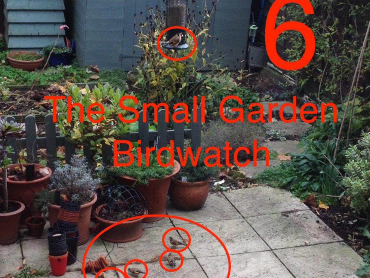 The Small Garden Birdwatch