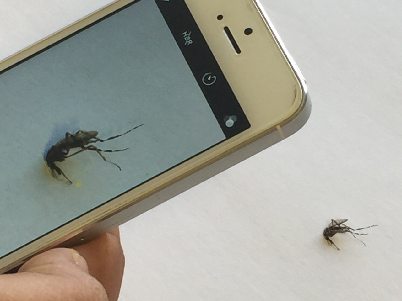 Identifying Mosquito Species Using Smartphone Cameras