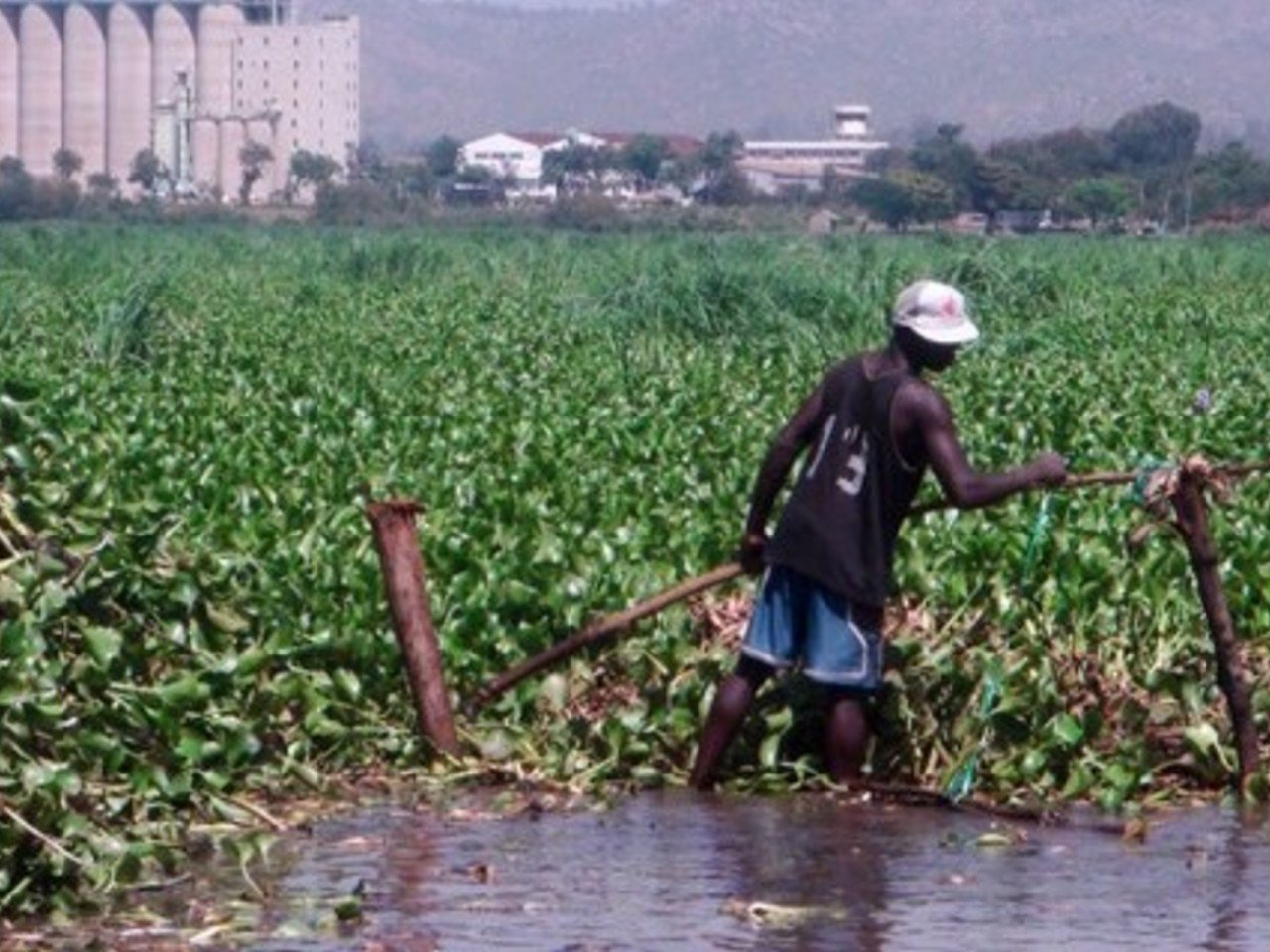 Use satellite data to Control water hyacinth in the Lake Victoria