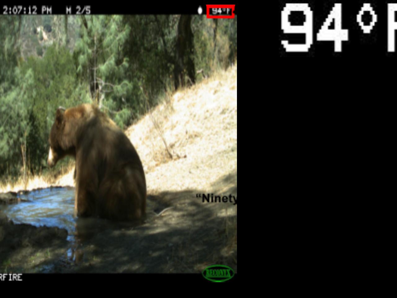 Recognizing temperature values in camera traps using OCR