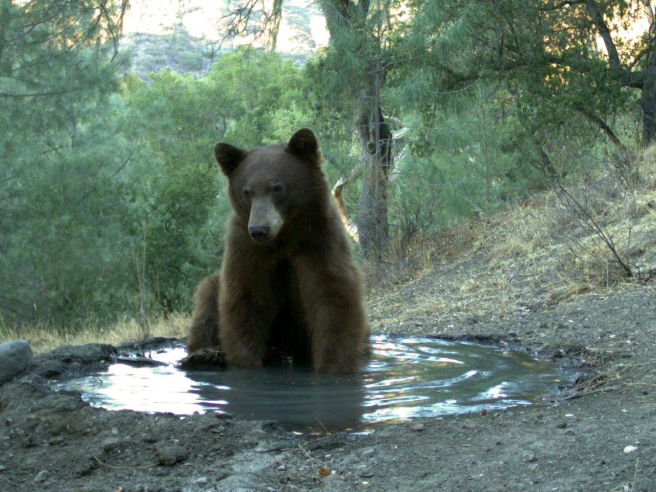 Where's the Bear? Automating Wildlife Image Processing Using IoT and Edge Cloud Systems