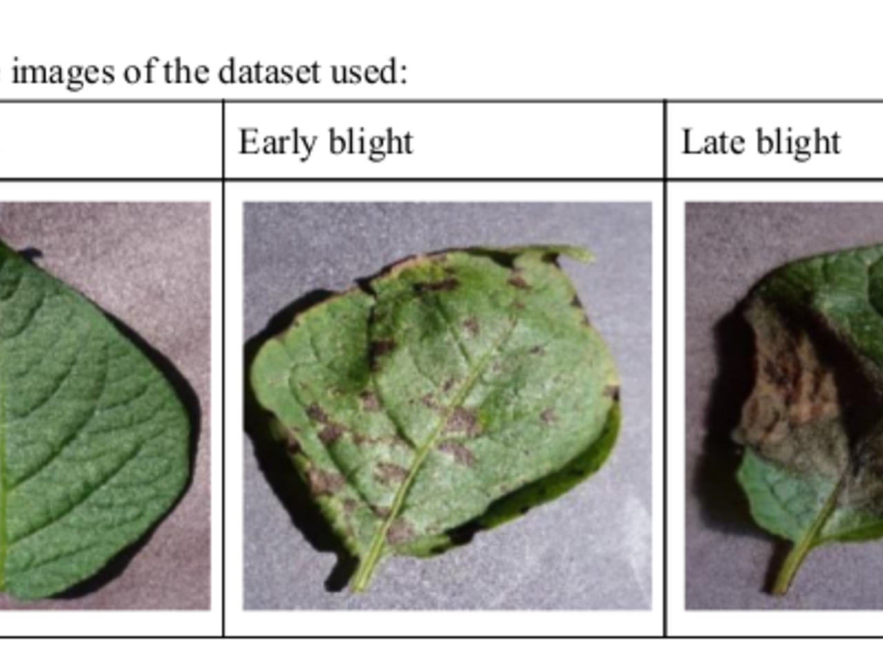 Plant Disease Detection Project Github